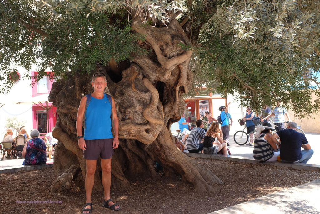 In front of an olive tree in Palma, Majorca